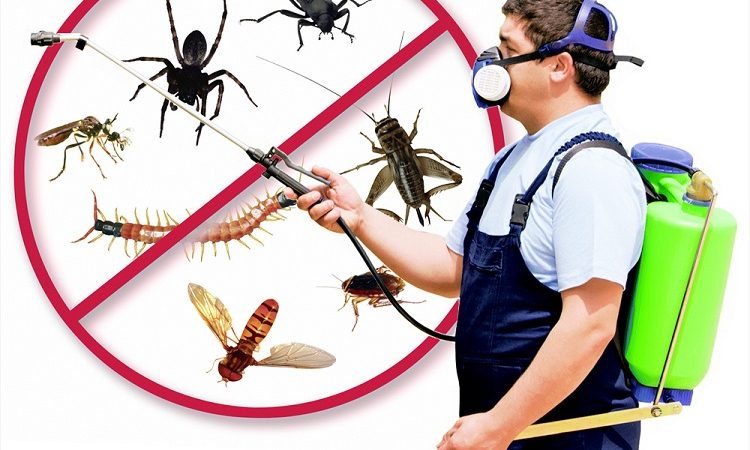 How to Deal with Pests before they get in the Way of Happiness and Comfort at Your Home