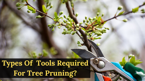 What Are Different Types of Tools Required for Tree Pruning?