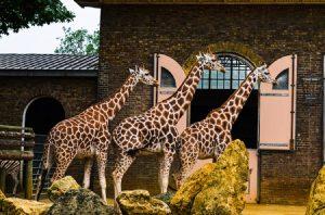 Zoo UK